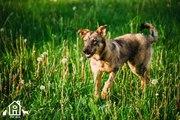 Самый лучший  пёс ищет  дом)