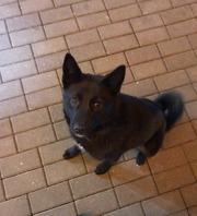 Клевый пес ищет дом!!!